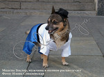 Собачья мода